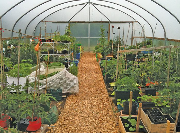 Community Polytunnel